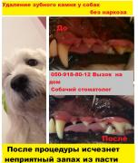 Removal of Tartar in dogs ultrazvukom home