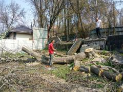Sawing off trees INEXPENSIVE, emergency removal of branches, CLEARING